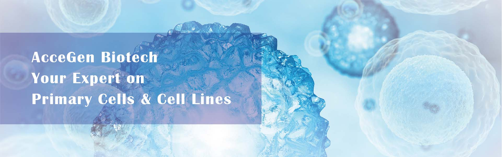 AcceGen Biotech, your expert on primary cells & cell lines, potent and pure human & animal primary cell product list.