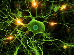 Scientists Successfully Discover the Relationship between Microglia and Human Disease, Expecting to Develop New Methods for Treatment
