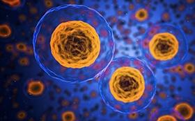 AcceGen Human Primary Cells