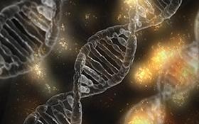AcceGen Rat Primary cells