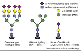 AcceGen Knockout Cell Lysate