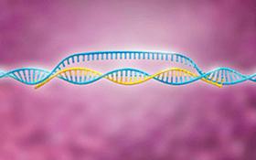 AcceGen Mouse MicroRNA Agomir/Antagomir