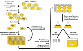 AcceGen Overexpression Stable Cell Lines