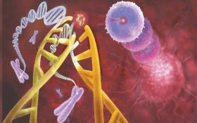 AcceGen Rat MicroRNA Agomir/Antagomir