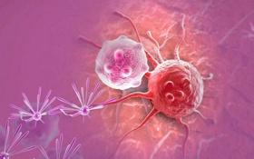 AcceGen Tumor Cell Lines